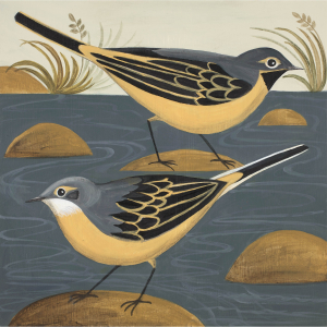 Wandering Wagtails